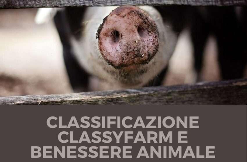 Classificazione ClassyFarm e benessere animale